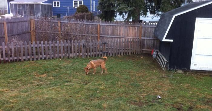 Ellie B gets her grass back.