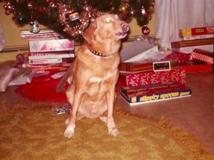 I got Taffy for my fourth Christmas, and he stood guard over the family tree for 10 years.