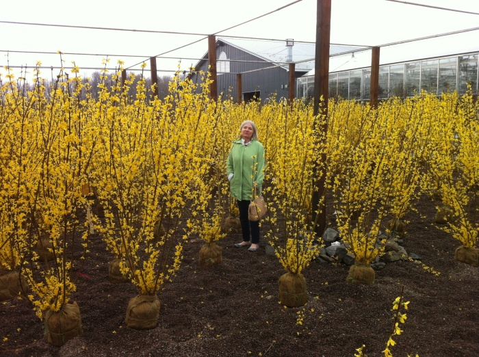 You picked the wrong jacket to hide in the forsythia section, my dear wife Karen.