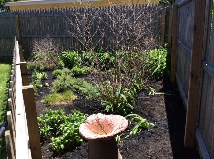 The finished garden from the right side of the fenced triangle.