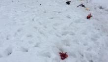 Dog's backyard spread in Syracuse, N.Y.