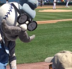 Mascot pops looks into the crowd.