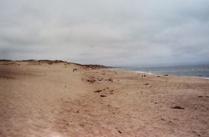 Dunes of Monterey Peninsula.