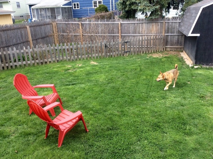 Ellie B will share the backyard with Karen and I.