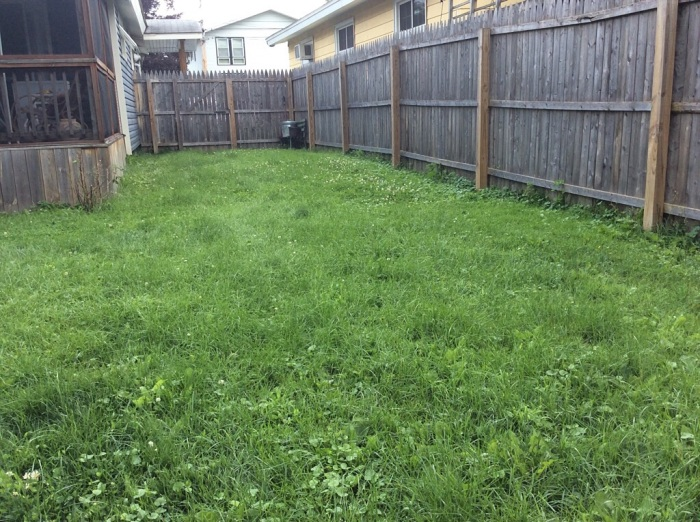 Over-wrought lawn.