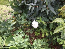 The smallest of white blooms.