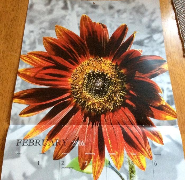 My dear wife loves sunflowers.
