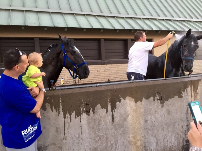 Watching the hose and horse.