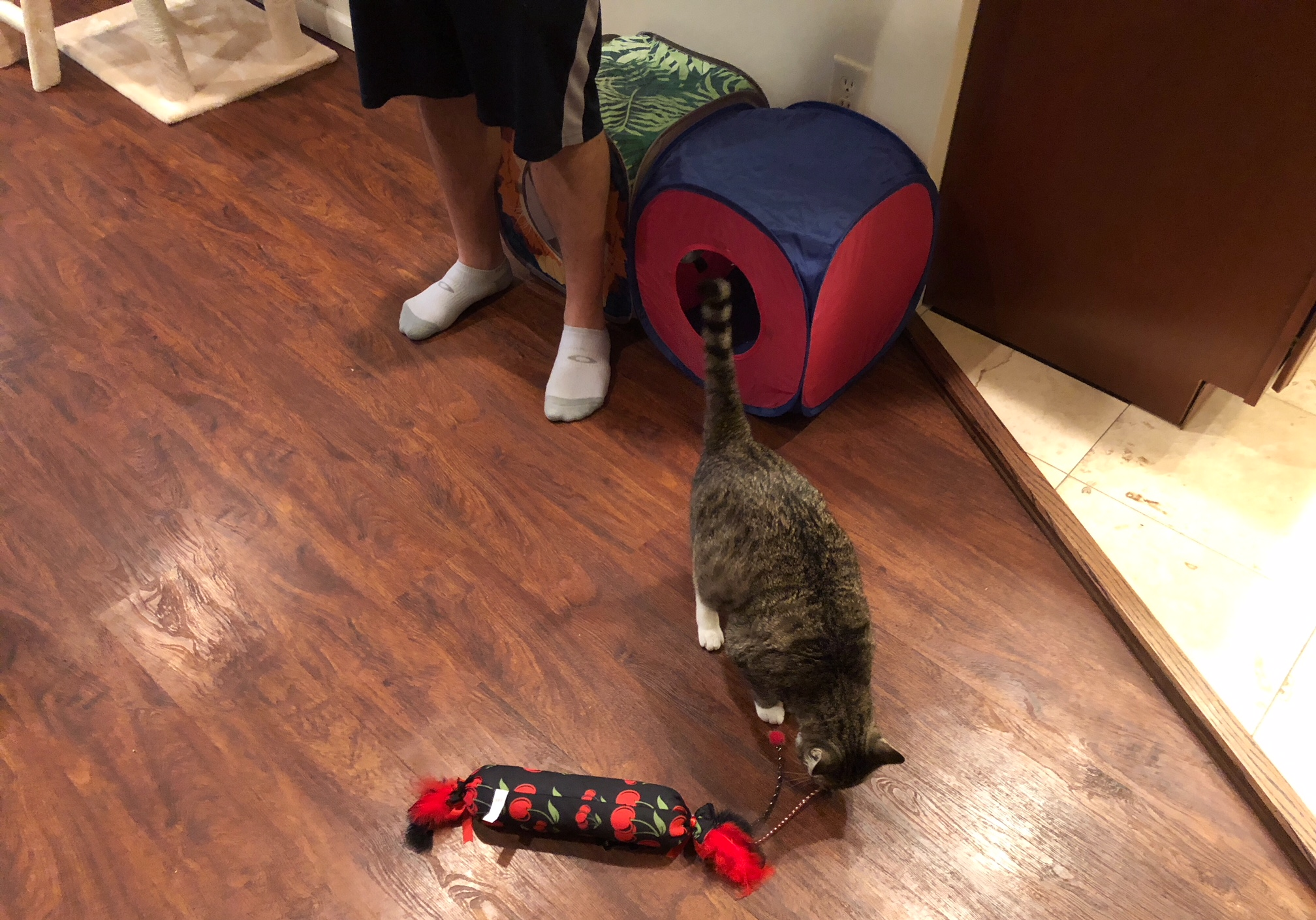 My Cat Stopped Eating And Aggressive