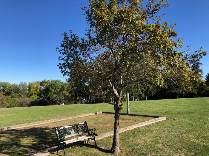 Neighborhood bench