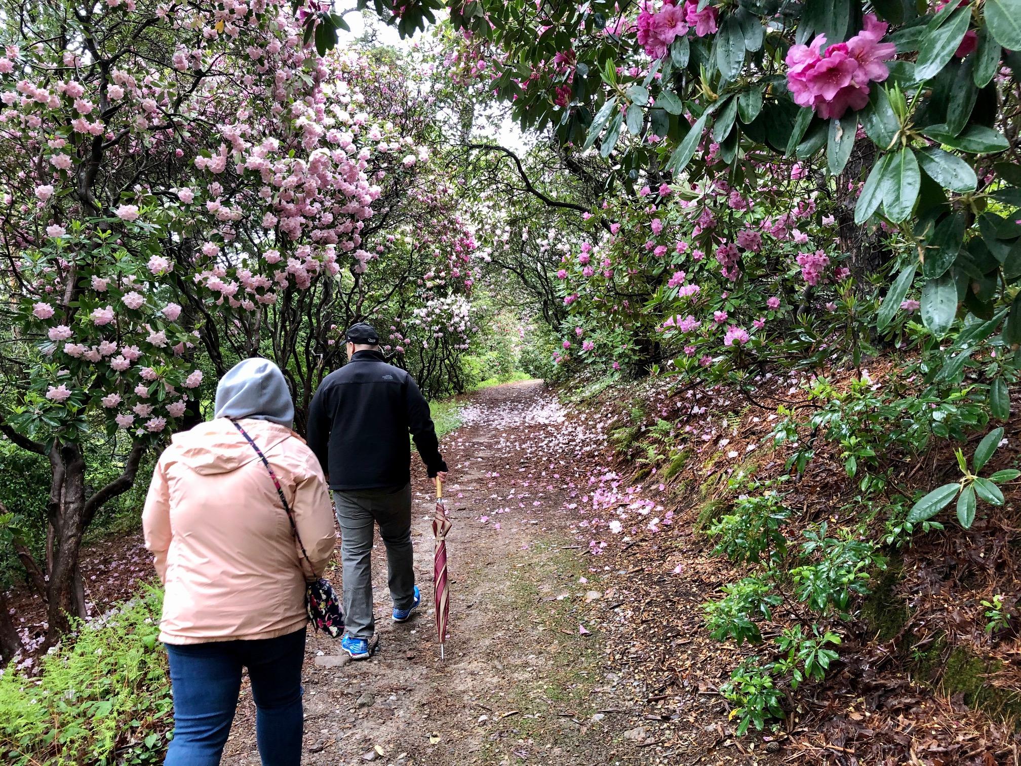 Rhododendron Festival